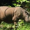 Sumatra's Rarest Animals