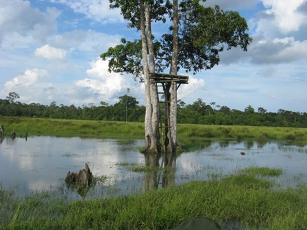 Bird blind surrounded by water in Way Kambas.