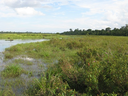 Crocodile swamp in Way Kambas.