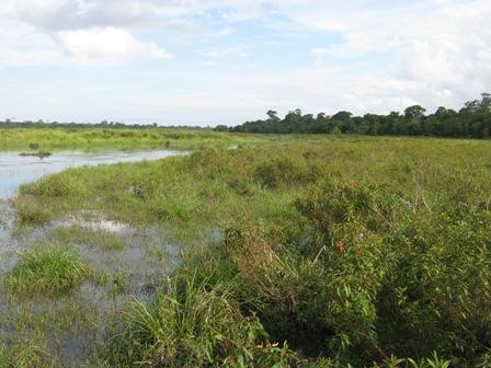 Crocodile swamp in Way Kambas.