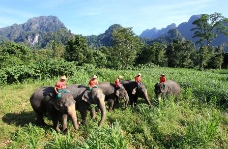 Near Elephant Camp outside Khao Sok National Park.