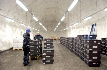 Global Seed Vault interior with employees checking seed storage.