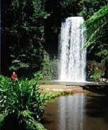 Millaa Millaa Falls in the Atherton Tablelands