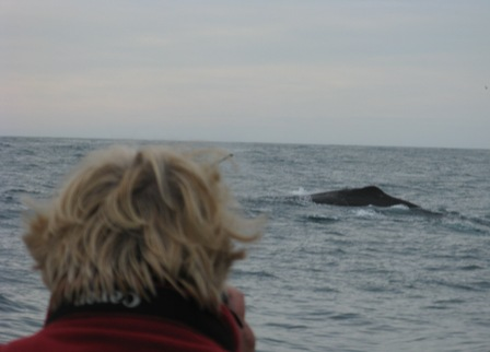Sperm whale and fellow passenger during Whale Watching Tour off Kaikoura.