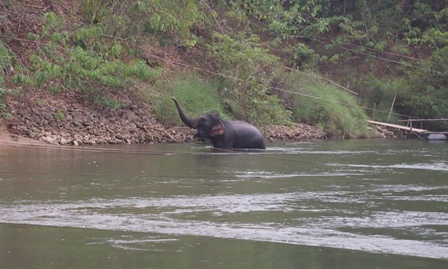 Elephant outside my back door at River Kwai Jungle Raft camp