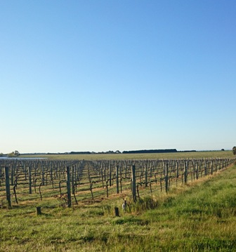 Dinny Goonan vineyard