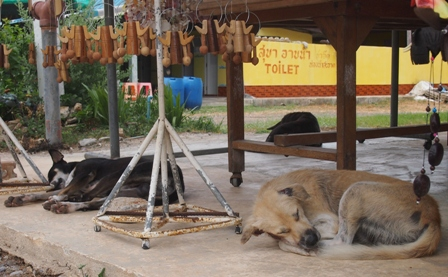 Fishing Village dogs catching an afternoon nap