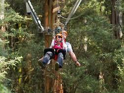 Ziplining at Otway Fly
