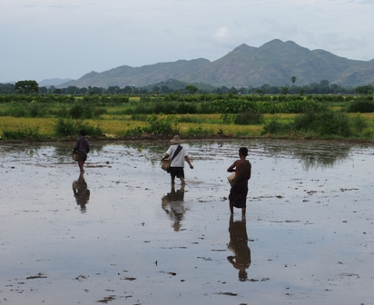 Rice sowing outside Mandalay