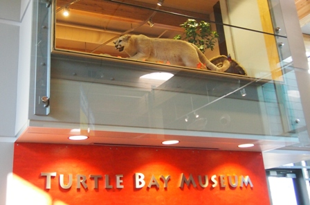 Turtle Bay Museum