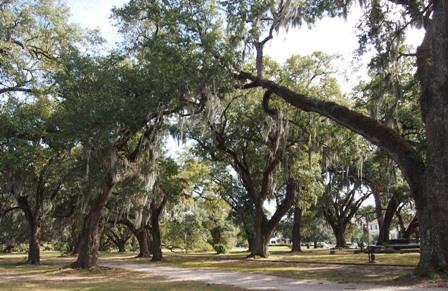 City Park live oaks