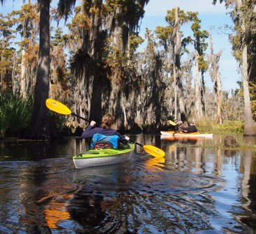 Kayaks on the bayou