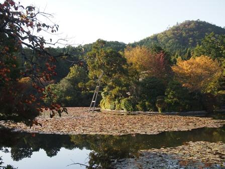 Garden at Ryoanji Temple