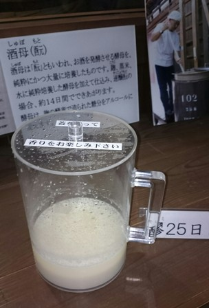 Fermenting sake on display at Geikken